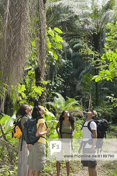 Freundschaft  Forschung  Regenwald