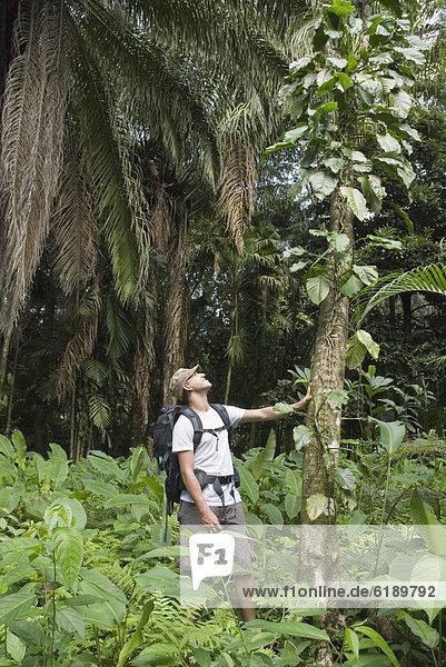 Mann  Forschung  Hispanier  Regenwald