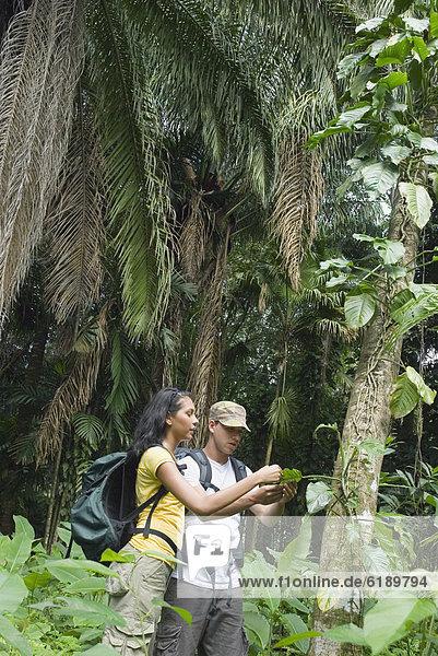 Forschung  Hispanier  Regenwald