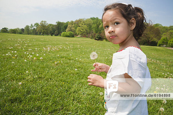 Girl walking in field with dandelion flower, Girl walking in field with dandelion flower