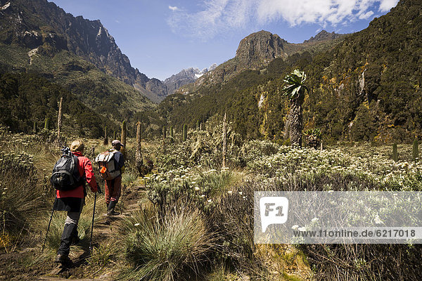 Young woman and a guide are walking on the Margherita Glacier towards the horizon  Ruwenzori Mountains  Uganda  Africa