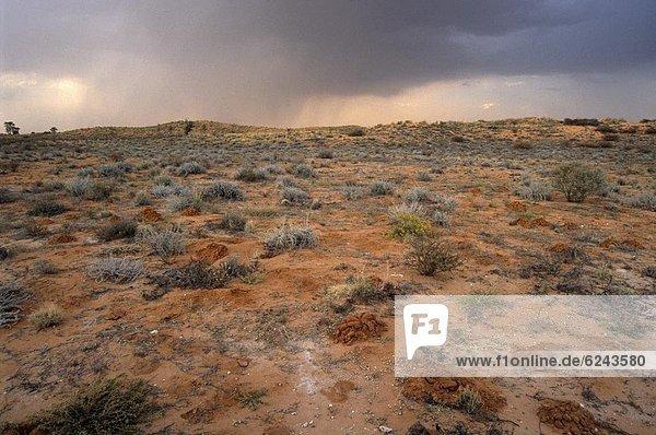 Südliches Afrika  Südafrika  Wolke  über  Wüste  Regen  Kalahari  Afrika  August