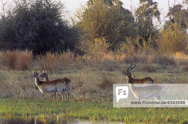Afrika  Botswana  Okavangodelta