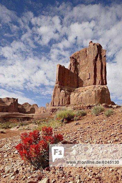 Vereinigte Staaten von Amerika  USA  Felsbrocken  Pinsel  Anordnung  Nordamerika  Arches Nationalpark  Utah
