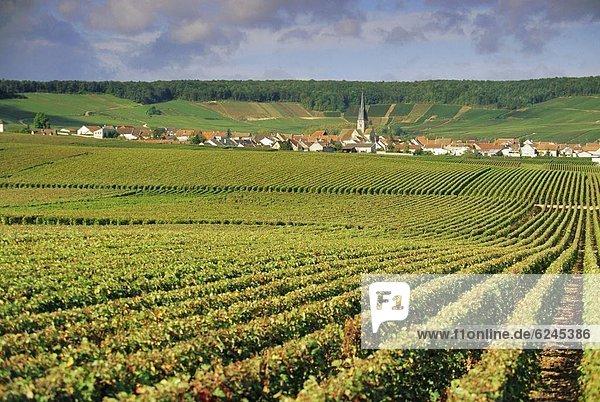 Frankreich Europa Champagner