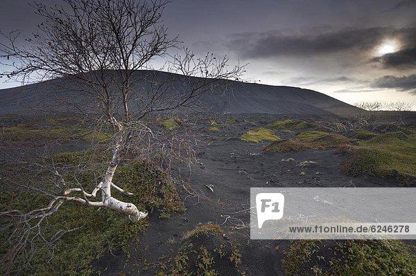 Landschaft  schwarz  Vulkan  Öde  Myvatn  Hverfjall  Asche  Island