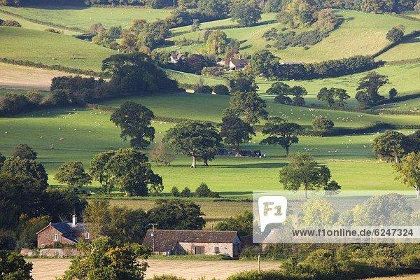 Europa sehen Ländliches Motiv ländliche Motive offen Großbritannien England Somerset