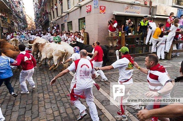Bulle  Stier  Stiere  Bullen  Europa  rennen  Pamplona  Spanien