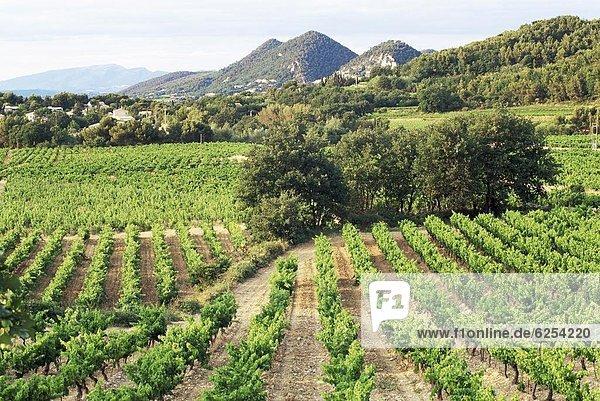 entfernt  Frankreich  Europa  Dorf  Ansicht  Weinberg  Provence - Alpes-Cote d Azur  Distanz  Vaucluse