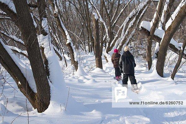 Vereinigte Staaten von Amerika  USA  Schnee  Wald  Schuh  Nordamerika  Minnesota  Show