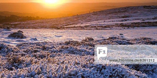 Europa  bedecken  Großbritannien  Sonnenaufgang  Devon  England  Schnee