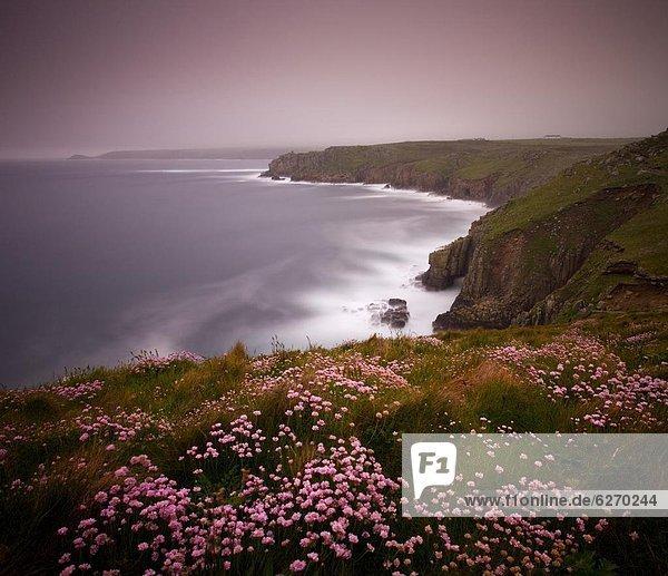 Europa  Großbritannien  über  Wachstum  Meer  Landschaft  Cornwall  Ende  England
