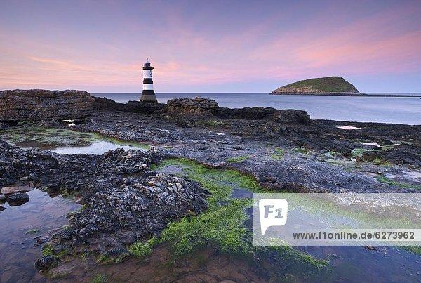 Europa  Großbritannien  über  Leuchtturm  Insel  zeigen  Papageitaucher  Fratercula arctica  Abenddämmerung  Wales