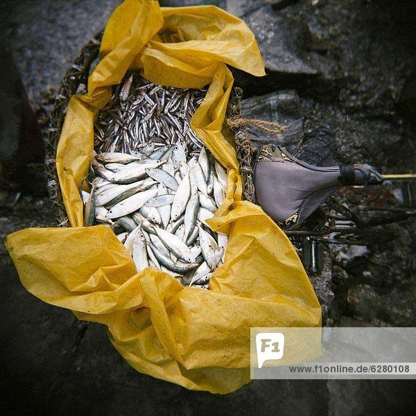 Ostafrika  Fisch  Pisces  Frische  Tasche  gelb  Kunststoff  Fahrrad  Rad  Afrika  voll  Tansania  Sansibar