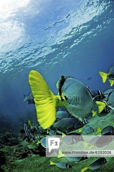 Galapagosinseln  Ecuador  Südamerika