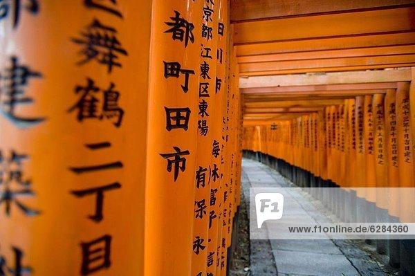 Tokyo  Hauptstadt  Asien  Fushimi Inari Schrein  Japan