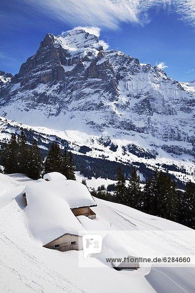 Europa Westalpen Berner Oberland Grindelwald Schweiz Schweizer Alpen