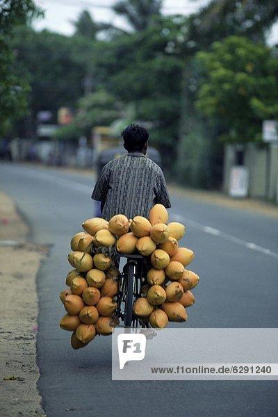 Mann  tragen  Fahrrad  Rad  Asien  Sri Lanka