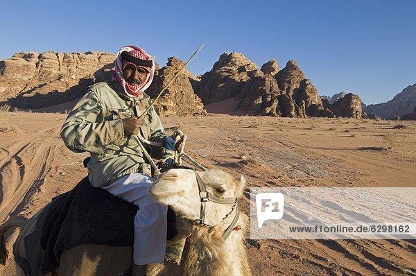 Wüste  Naher Osten  Beduine  Kamel  Wadi Rum