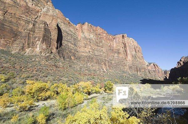 Zion Nationalpark  Utah  Vereinigte Staaten von Amerika  Nordamerika