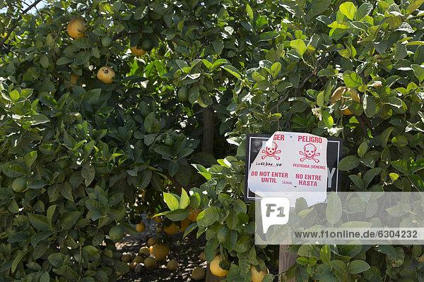 Ein Schild warnt vor der Anwendung des Pestizids Lorsban  von Dow Chemical Company vertrieben  in einem Orangenhain  Woodlake  Kalifornien  USA