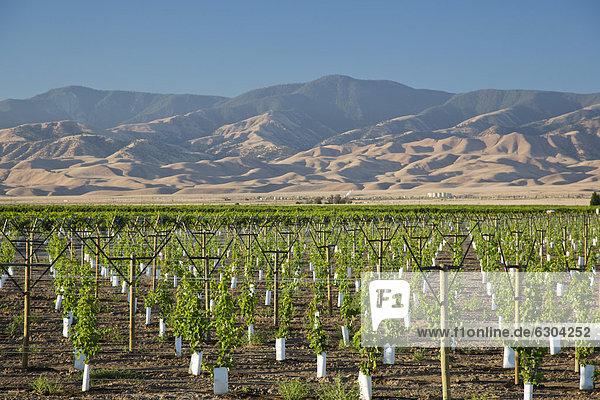A newly-planted vineyard in the San Joaquin Valley  Maricopa  California  USA