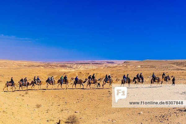 führen  Mann  Wüste  Safari  Beduine  Kamel  Israel  Negev