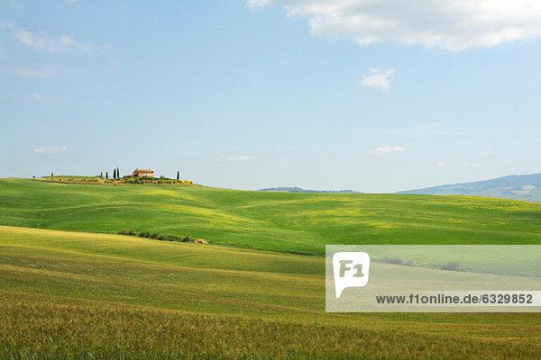 Rollende Landschaft  Toskana  Italien