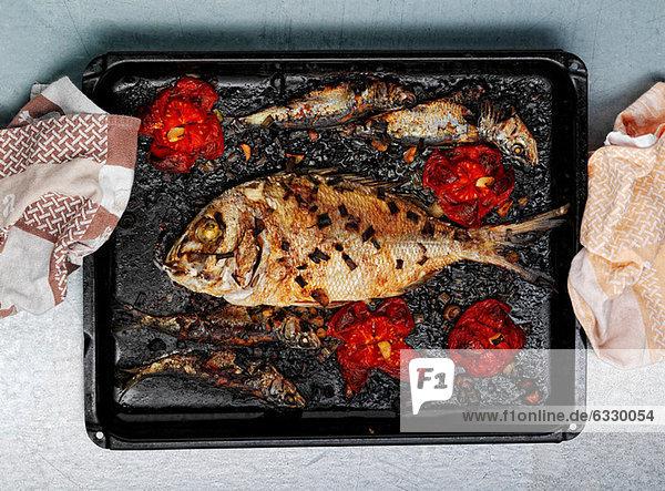 Gebratenes Doradenfischmehl auf Tablett