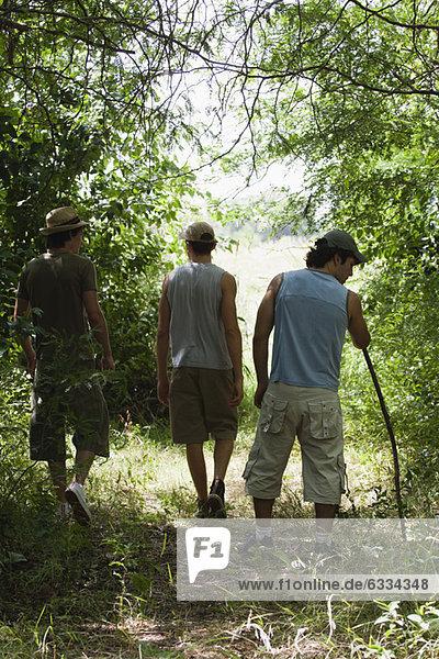 Männer beim Wandern im Wald  Rückansicht