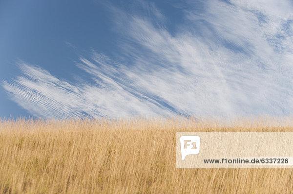 Wolke  über  00 Grundlegendes  Weizenfeld