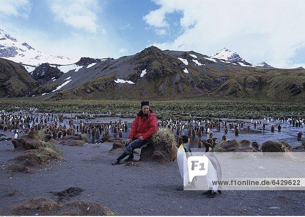 Eine Touristin beobachtet Königspinguine in Südgeorgien