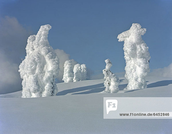 Schneebedeckte Bäume am Berghang,  Mount Seymour,  Vancouver,  British Columbia,  Kanada