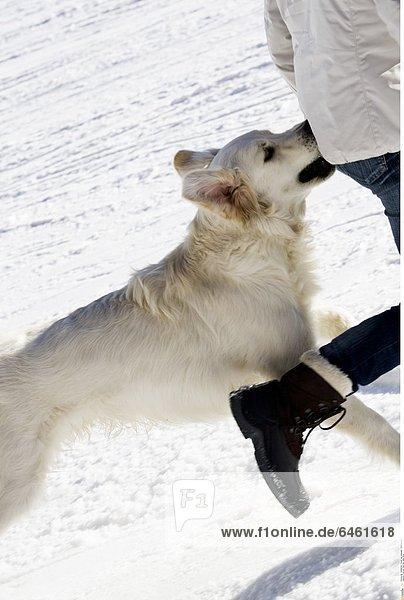 Frau und Hund auf dem Berg