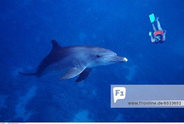 frau schwimmt mit delphin