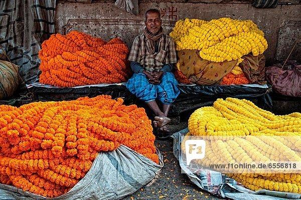 Ringelblume  Calendula officinalis  zwischen  inmitten  mitten  Blume  Verkäufer  Feston  ghat  Kalkutta  Indien  Markt