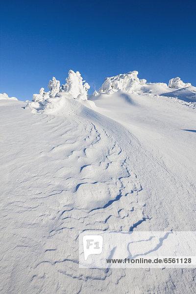 Deutschland  Bayern  Blick auf verschneite Winterlandschaft im Bayerischen Wald