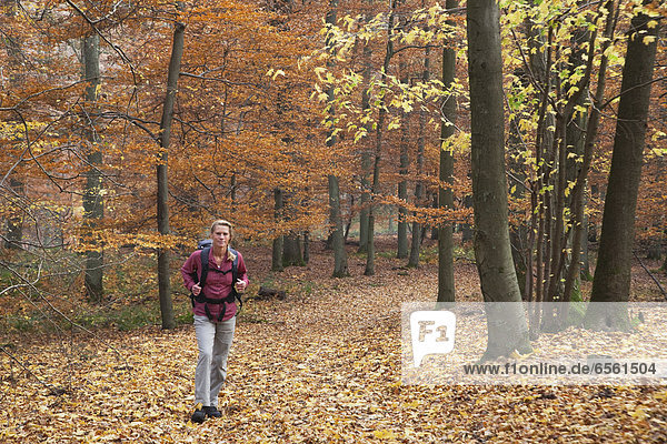 Germany  North Rhine Westphalia  Mature woman hiking in autumn forest