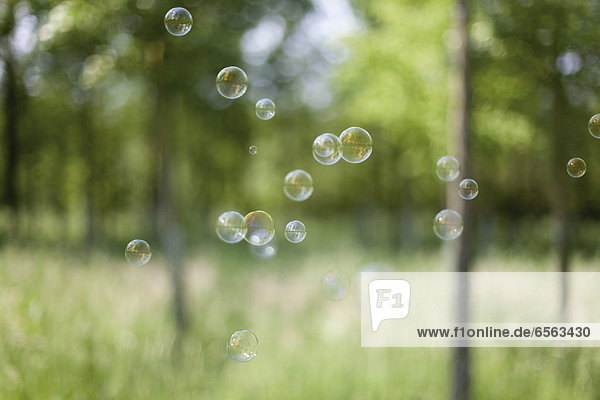Germany  North Rhine Westphalia  Neuss  Soap bubble floating in forest