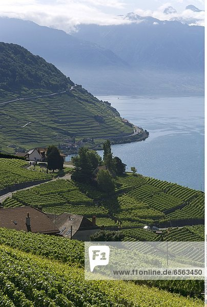 Lake Geneva: From Grandvaux until Lausanne  the wineyards offer a great view over the lake and the mountains around.
