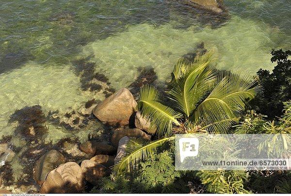 Seychellen  Seychelles  Indischer Ozean  Indian Ocean  Insel Praslin  Hotel Coco de Mer