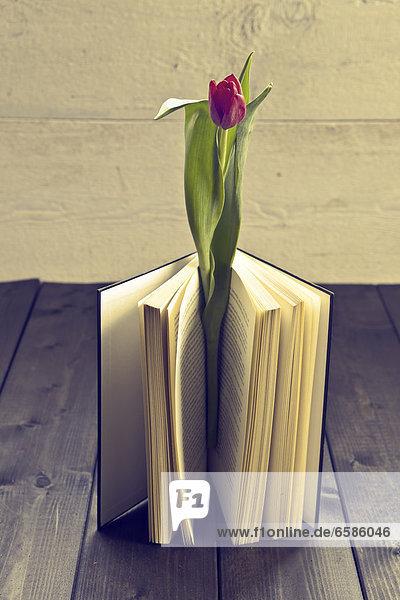 Eine Tulpe in einem Schuh *** Local Caption ***