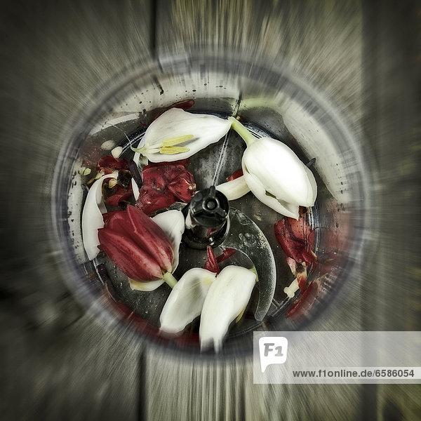 Blumen in einem Mixer *** Local Caption ***