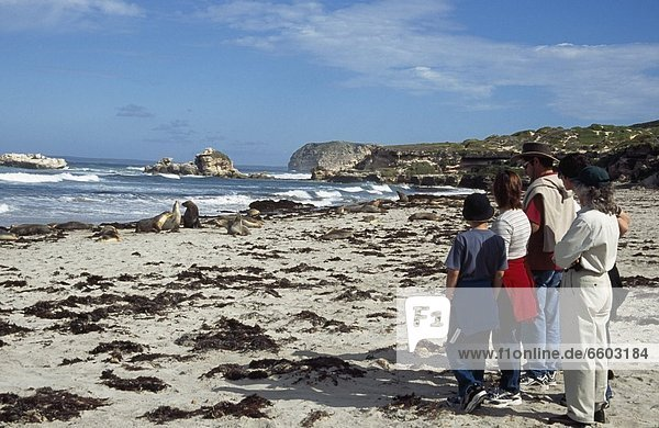 Tourists Looking At Seals