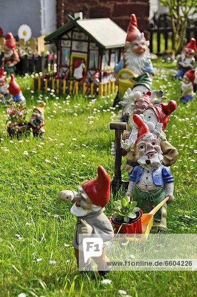 Gartenzwerge  sieben Zwerge auf der Wiese  Büches bei Büdingen  Hessen  Deutschland  Europa  ÖffentlicherGrund
