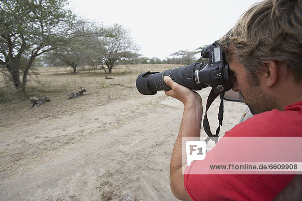 Wildhund Tourist Safari fotografieren