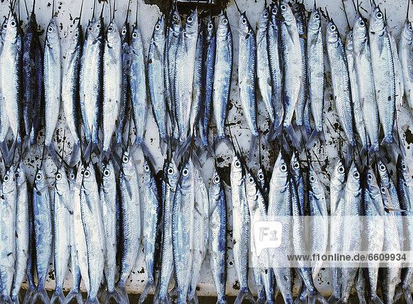 Fisch  Pisces  Stein  Frische  Stadt  Close-up  close-ups  close up  close ups  verkaufen  Markt