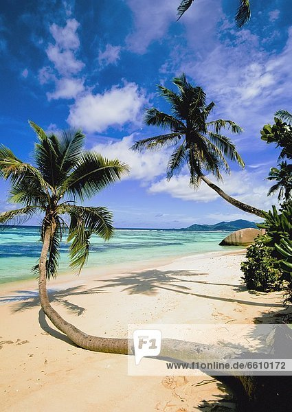 Leaning Palm Trees On Beach