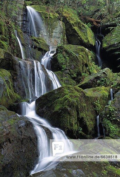 Vereinigte Staaten von Amerika  USA  Great Smoky Mountains Nationalpark  Tennessee