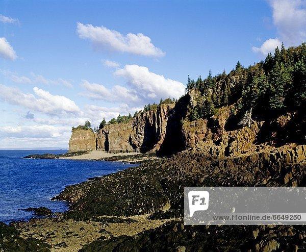 Felsen  über  Steilküste  Küste  Wald